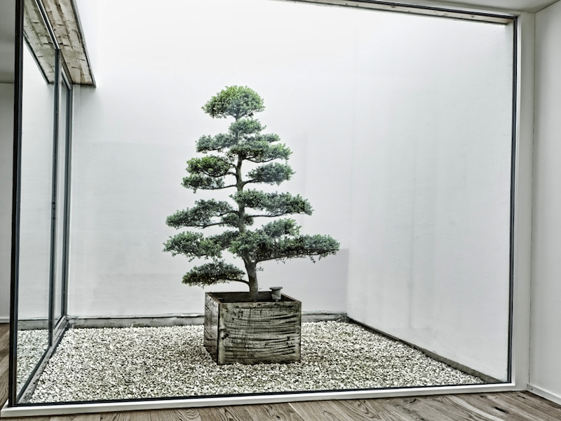 Tuin bonsai bomen bonsai empire for Bonsai de jardin