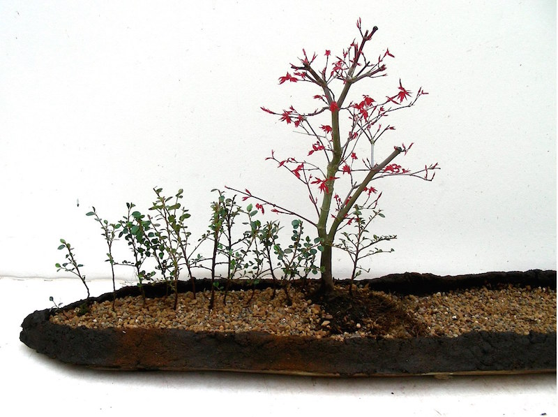 Landscape Bonsai