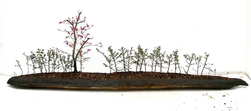 Landscape Bonsai with hedges