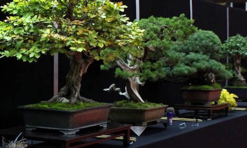 Bonsai bomen kweken vormen en verzorgen bonsai empire for Substraat betekenis