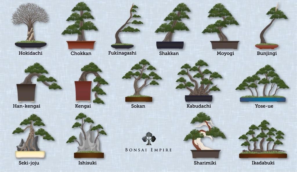 Bekijk een afbeelding van alle bonsai stijlen