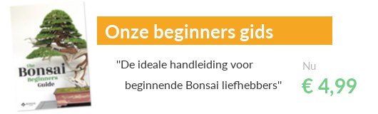 De Bonsai Beginners Gids, eBook