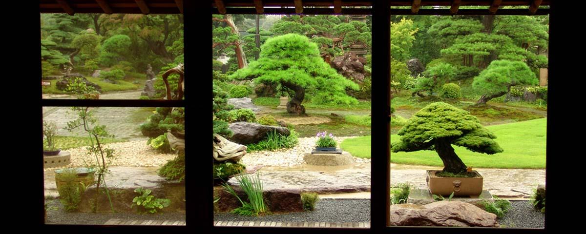 Japanse Bonsai tuin