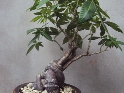 boom herkennen aan blad