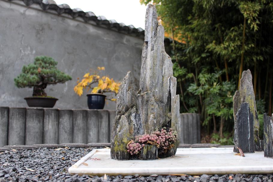 Botanische Tuin Amsterdam : Bonsai in amsterdam bonsai empire