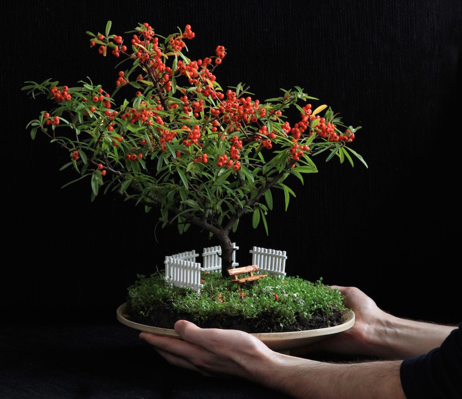 Great Bonsai tree