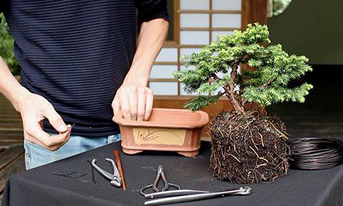 Hoe maak je een Bonsai?