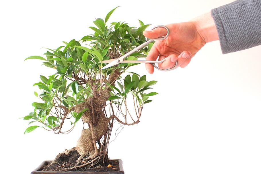 Bonsai Boom Verzorgen : Bonsai snoeien het vormen middels snoei bonsai empire