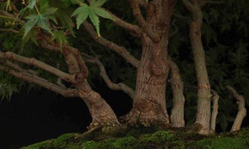 Help mijn bonsai gaat dood!