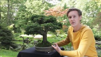Het Kweken Van Bomen Voor Bonsai Bonsai Empire