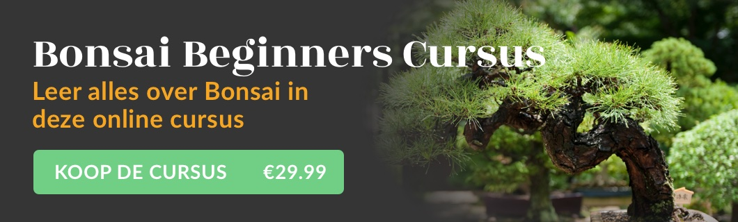 Bonsai Beginners Cursus