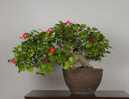 Bonsai bomen galerij bonsai empire for Substraat betekenis