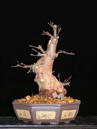 Wiring the bonsai