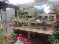 Appelboompje bonsai forum bonsai empire for Substraat betekenis