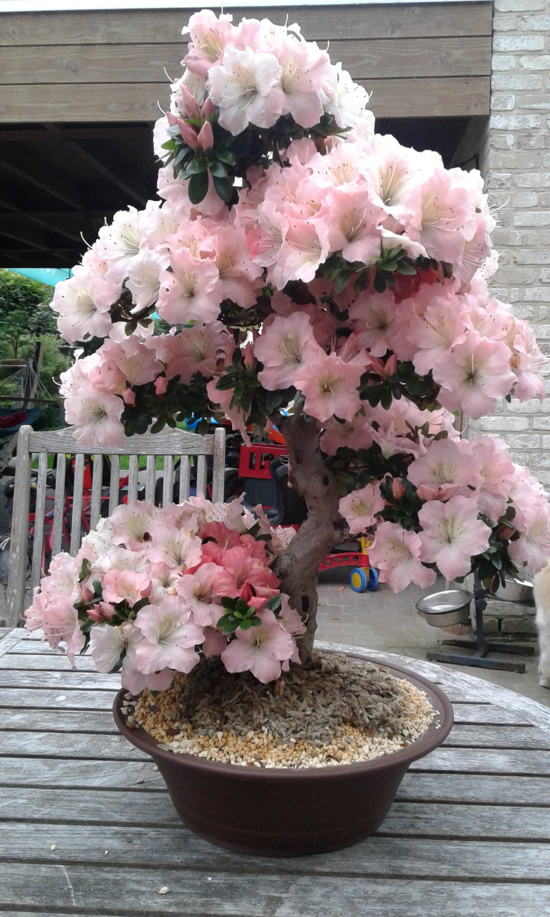 Mening bonsai forum bonsai empire for Substraat betekenis