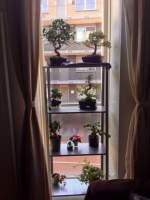 Carmona snoeien bonsai forum bonsai empire for Substraat betekenis