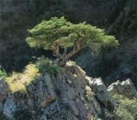 Japanse witte beuk vraag over uitlopen blad bonsai for Substraat betekenis