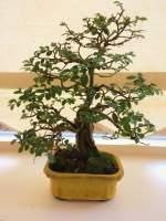 Onderzoek naar bonsaimarkt bonsai forum bonsai empire for Substraat betekenis