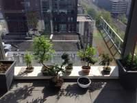 Verzorging sequoia bonsai forum bonsai empire for Substraat betekenis