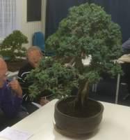 Gedetailleerde handleiding vormen foliage pads bonsai for Substraat betekenis