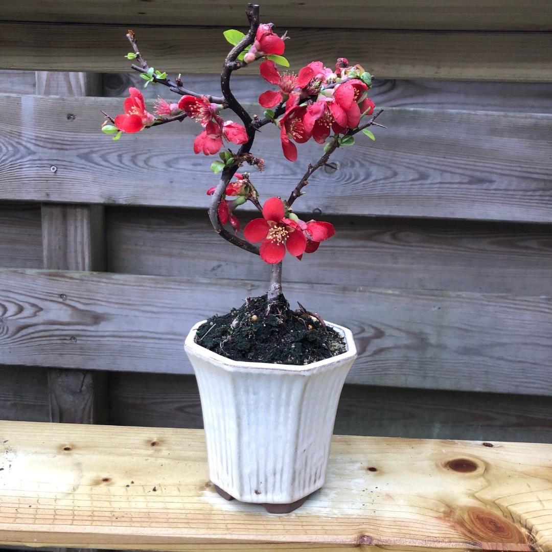 Fuij zand bonsai forum bonsai empire for Substraat betekenis