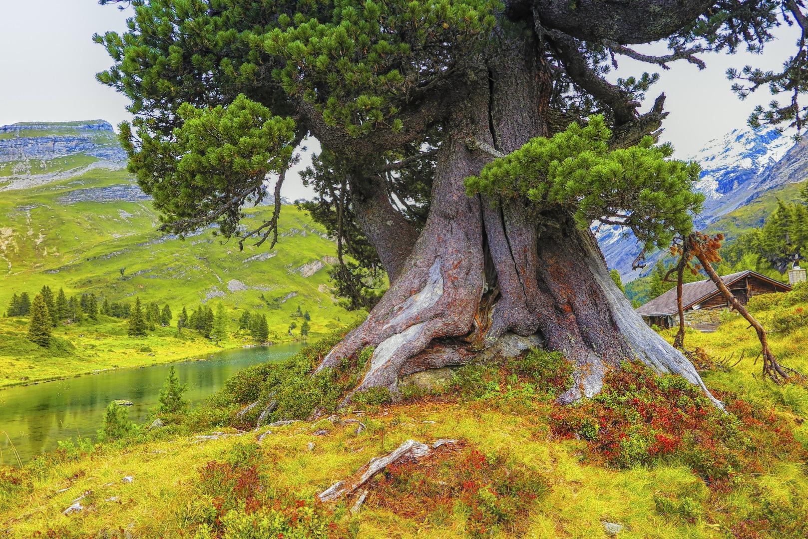 Acer campestre pagina 5 bonsai forum bonsai empire for Substraat betekenis