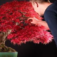 Help mijn bonsai gaat dood lees dit eerst bonsai for Substraat betekenis