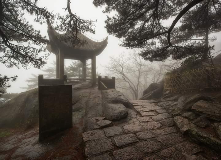 Nieuwe aankoop bonsai forum bonsai empire for Substraat betekenis