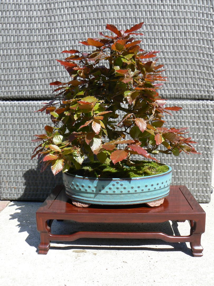 Te koop complete bonsai collectie pagina 2 bonsai for Substraat betekenis